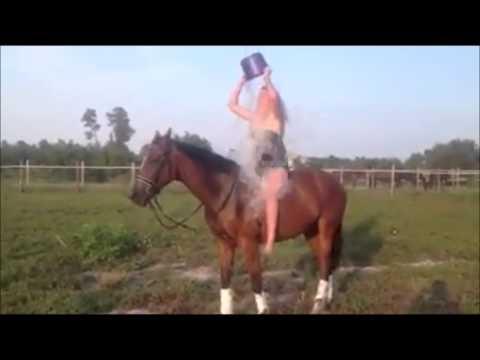 فيديو: مقطع مضحك.... حصان يعاقب فتاة بسبب تحدي دلو الثلج..ههههه