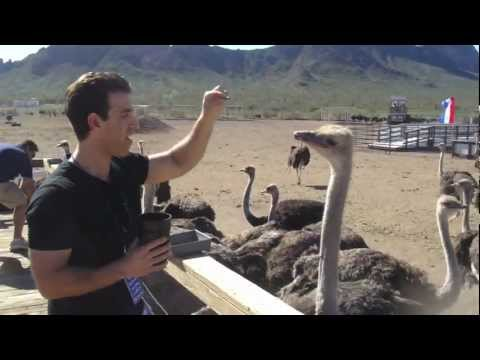 Ostrich Takes It All!
