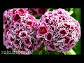 Фрагмент с начала видео Душистые садовые цветы: как подобрать самые ароматные растения для сада или дачи. Fragrant flowers
