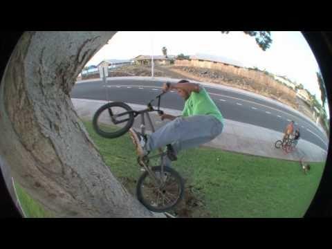 BMX Tree Ride