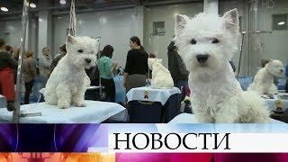 В Москве на интернациональной выставке собак за звания чемпионов борются 15 тысяч участников.