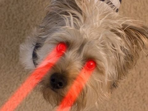 Remote Controlled Dog Hack