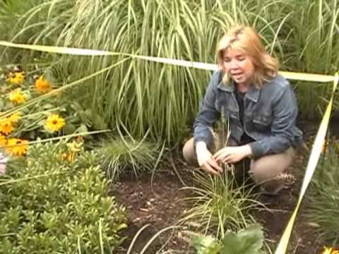 How To Create A Rain Garden In Your Yard with Senga Landscape Architect