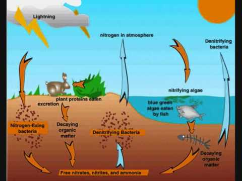 Carbon and Nitrogen Cycles