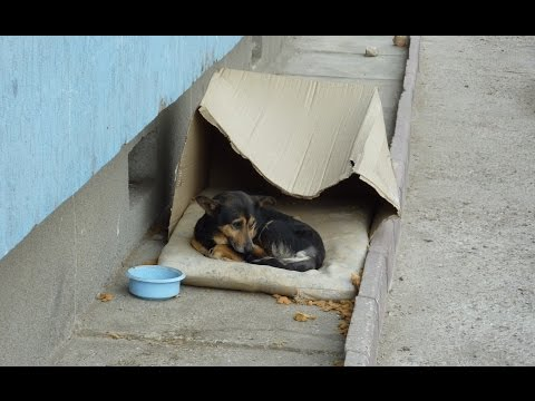 Homeless dog living in a cardboard box gets rescued & has a heartwarming transformation. - UCqeekxc7CKRYHNV9PVV_HCQ
