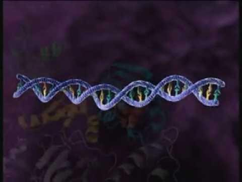 HIV Replication 3D Medical Animation