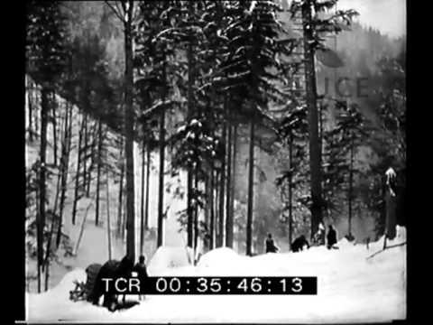 Taglio dei boschi sul monte Beskides in Cecoslovacchia