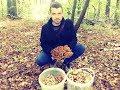 Сбор грибов! Сбор осенних, ТОЛСТОНОГИХ опят от 07.10.2017