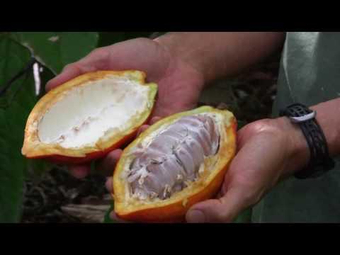 Koa Kahili's Cacao - 2