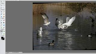 Erasing Objects in Adobe Photoshop Elements 11 - Basic Tutorial