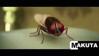 Makuta VFX - Eega Breakdowns