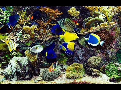 Amazing Virtual Aquarium - Real Tropical Colorful Fish! Relaxing Natural Sounds - (29:00) HD 1080p