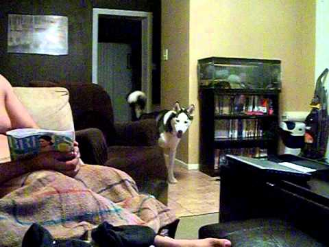 Dog afraid of Julia Roberts.AVI