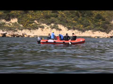 Biodiversità dell'Adriatico 8-9 Giugno - Immersione sui fondali antistanti al colle San Bartolo