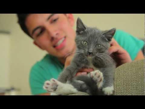 Jedi Kittens - Behind the Scenes