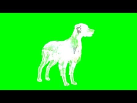 Ghost Dog green screen - free green screen