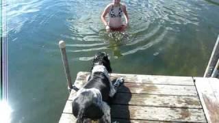 海にびびって後ずさりして落ちるわんちゃん。ドジっ子犬