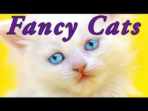 FANCY CATZ - teh cutiest LOL caz in teh WORLDZ!
