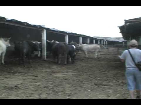 toros de reparo COPA MILLONARIA EXTREMA
