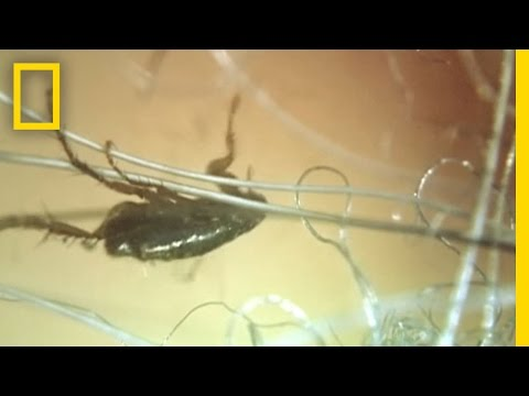 I Didn't Know That - Secret Life of Fleas