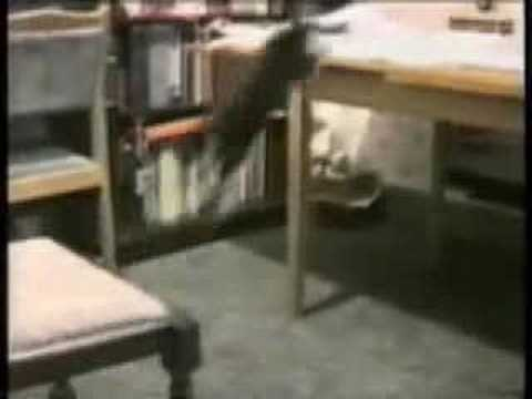 Probably the Funniest Cat Video You-ll Ever See