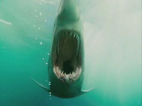 Shark Night 3D Bande Annonce