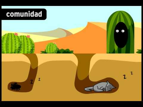 Ecosistemas - BrainPOP Español