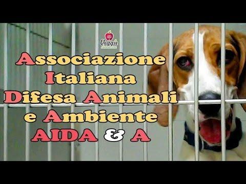 Associazione Italiana Difesa Animali e Ambiente - AIDA & A