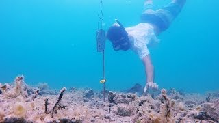 這名潛水員在海底放了一個鐵盒子,最後拉上來的東西讓人嘴都合不上...