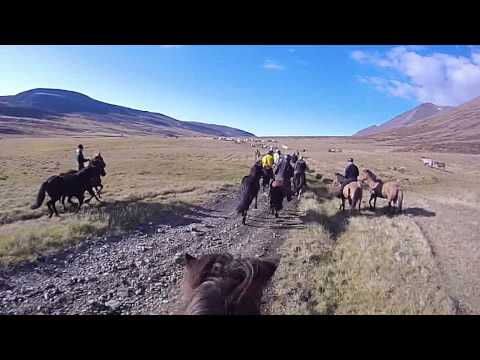 Herding horses through Laxa&#769;rdalur valley