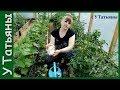 СОДА - спасатель вашего огорода! Пищевая сода - подкормка для: огурцов, томатов и других растений
