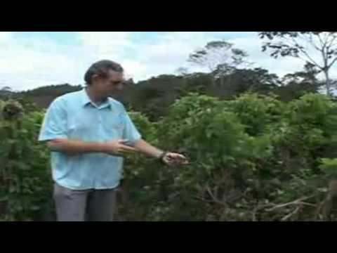 Adubo verde e compostagem orgânica se tornam alternativas para agricultores