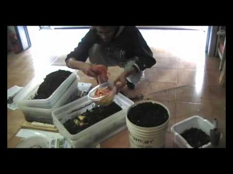Tentativi di compostaggio domestico con i lombrichi :)