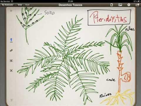 Reino das Plantas - Noções Básicas - Botânica