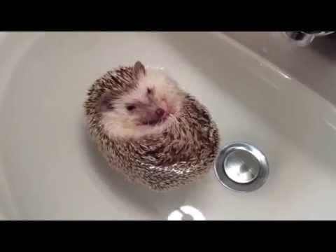 Забавные видео с животными и детьми