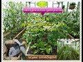 Огородничество. Выпуск #28 - ЗОЛА - Супер Подкормка для Томатов. Натуральное Удобрение. Аляска, США
