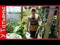 СОДА и МЫЛО ЛУЧШЕЕ средство от МУЧНИСТОЙ РОСЫ на: огурцах, кабачках, смородине и др. растениях