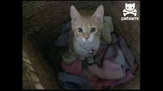 חתול כביסה