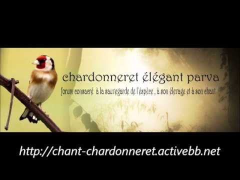 chant chardonneret Bois Descart