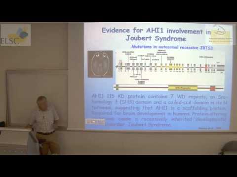 ELSC-ICNC Seminar: Bernard Lerer