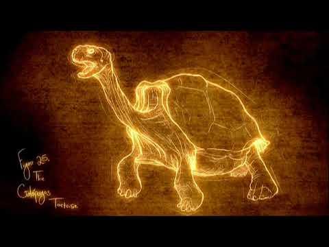 Darwin: l'evoluzione della specie