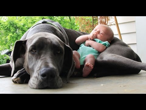Pas i beba…