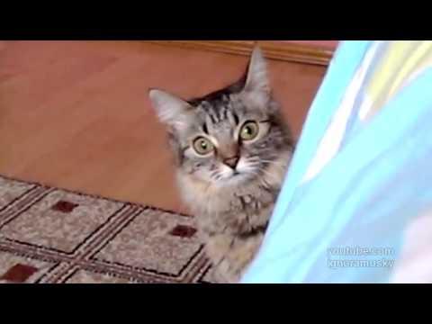 The cat is planning something evil (кот задумал что-то недоброе)