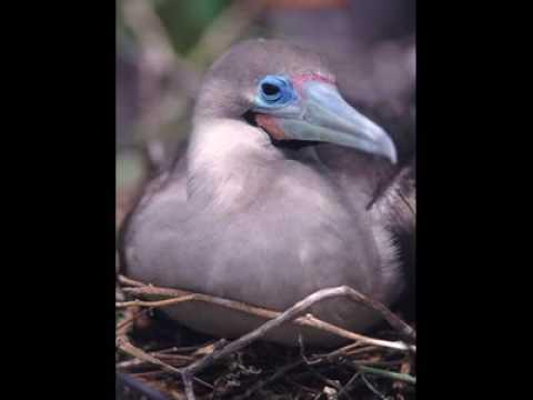 fauna de las islas galapagos