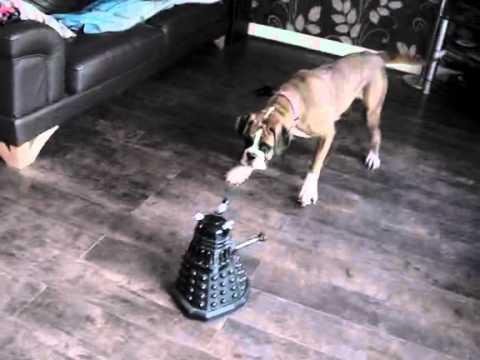 Boxer vs Dalek