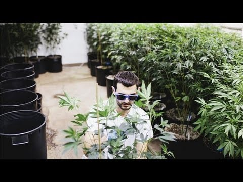 How to Grow Your Legal Pot Business  4/25/13