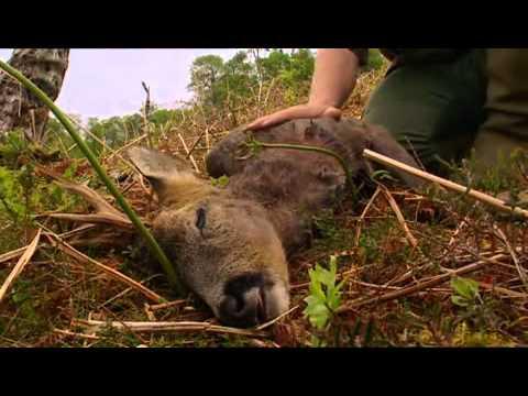 Ray Mears' Bushcraft S01E01 - Aboriginal Britain