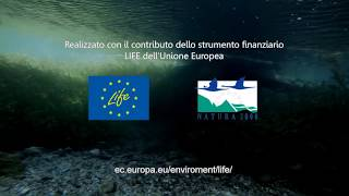 Video divulgativo delle attività di progetto
