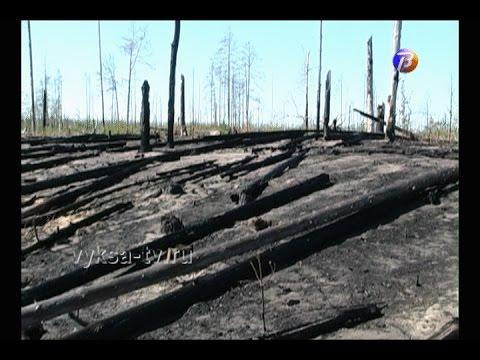 Утилизация отходов деревопереработки стала причиной возгорания леса вСноведи