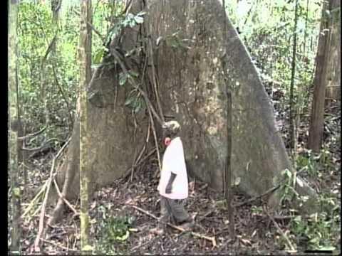 Salvemos nuestros bosques